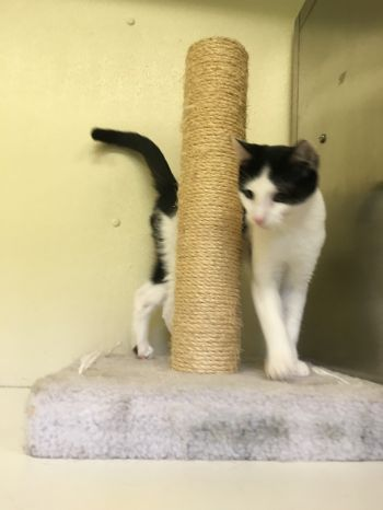 Bandito is looking for a friend!
