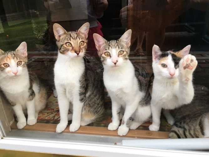 Susans Cats and Kittens