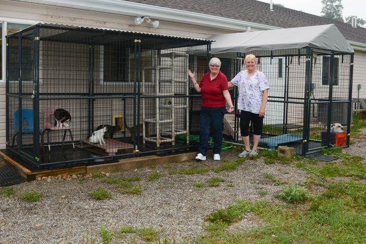 Outdoor Enclosure for Cats (Catio)