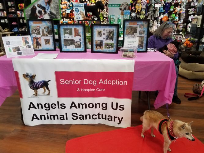 Angels Among Us Animal Sanctuary