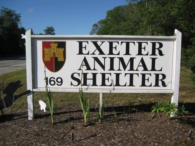 Friends of Exeter Animals