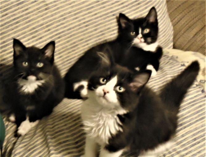 Cat Adoption Team Services