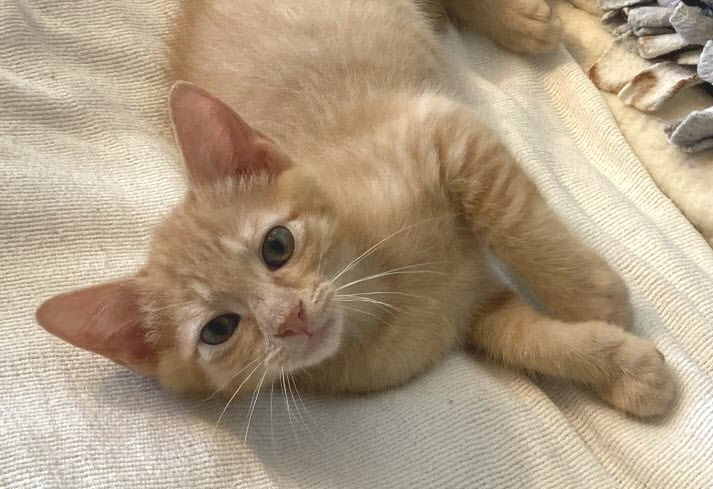 Mystique - one of the super hero kitties!