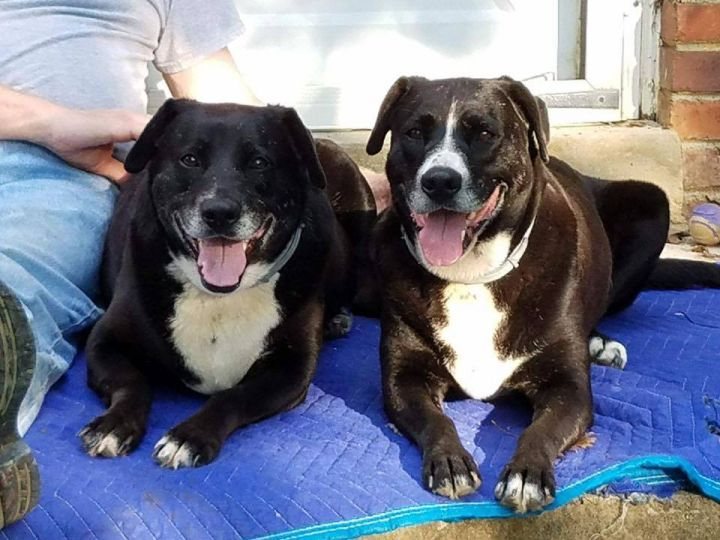 Precious and Puddin - Still available for adoption