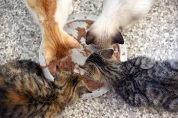 Feeding time in our kitten room.