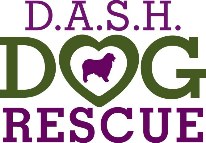 DASH Dog Rescue