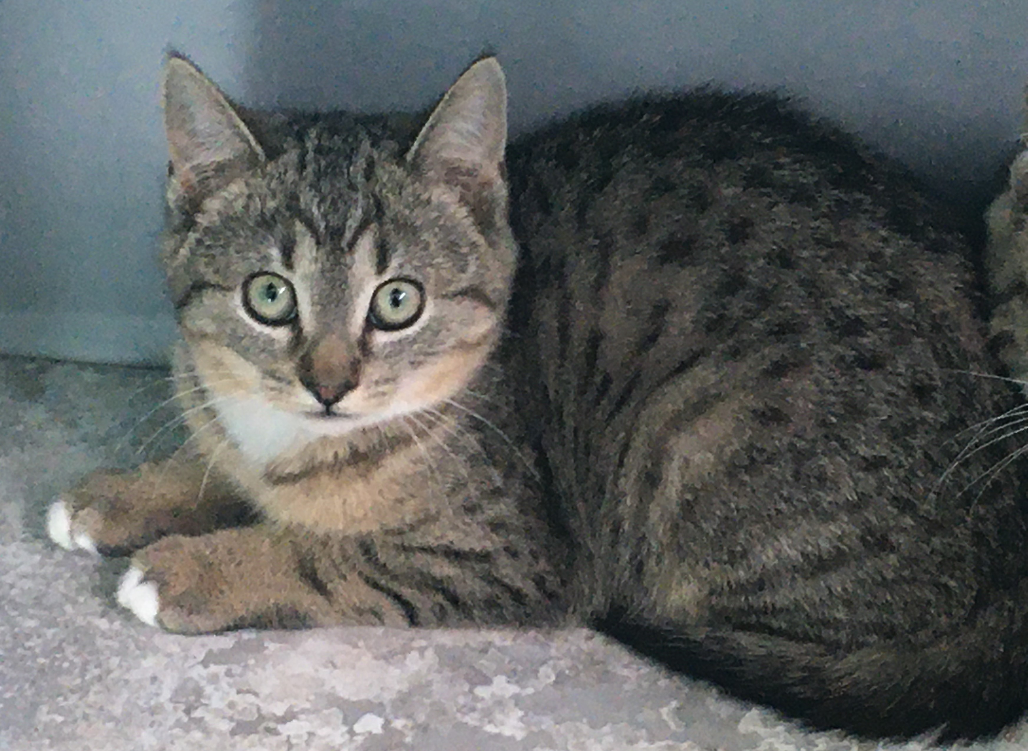 Pets For Adoption At Humane Society Of Fairfax County Inc In Fairfax Va Petfinder