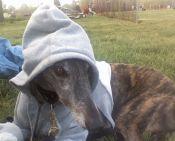 Greyt Expectations Greyhound Rescue(tm), Inc.