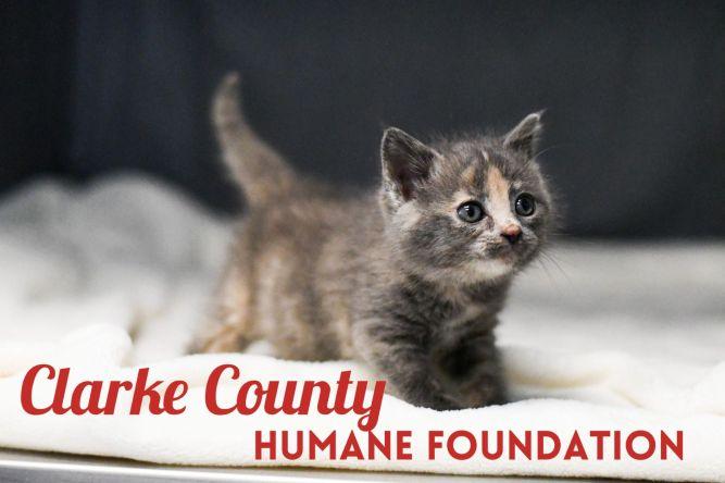 Clarke County Animal Shelter