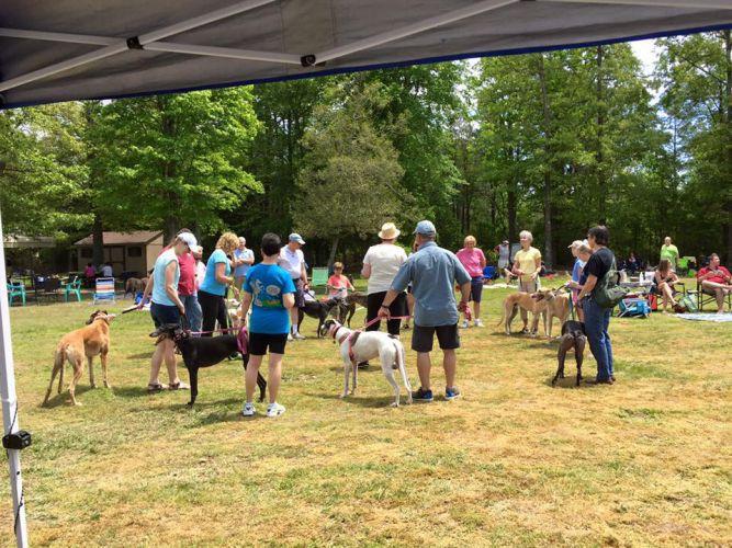James River Greyhounds