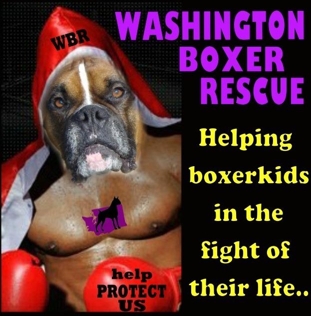WASHINGTON BOXER RESCUE