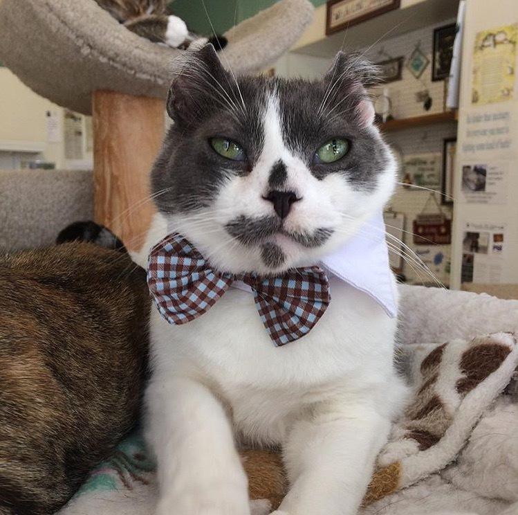 Pets For Adoption At Kindred Kitties, In Kenosha, WI