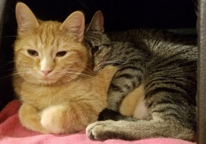 Marshfield Area Pet Shelter