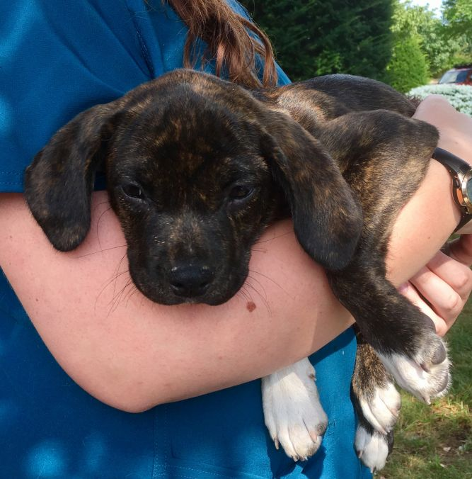 Pendleton Animal Welfare Shelter