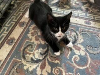 Adopt-A-Pet Clinic, Inc.
