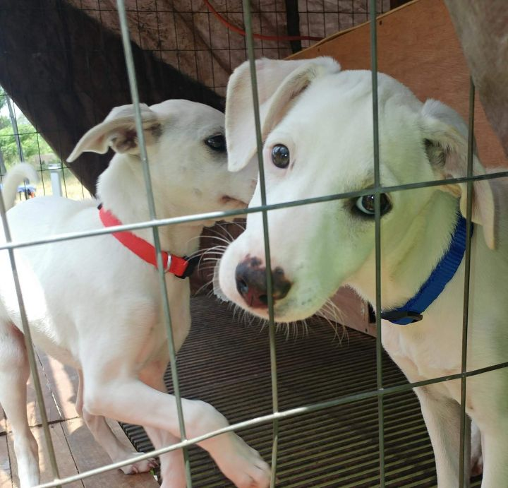 """Lavani and """"Snow"""" White ADOPTED"""