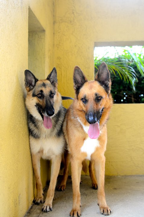 Pets For Adoption At Shepherd Help And Rescue Effort In Pompano