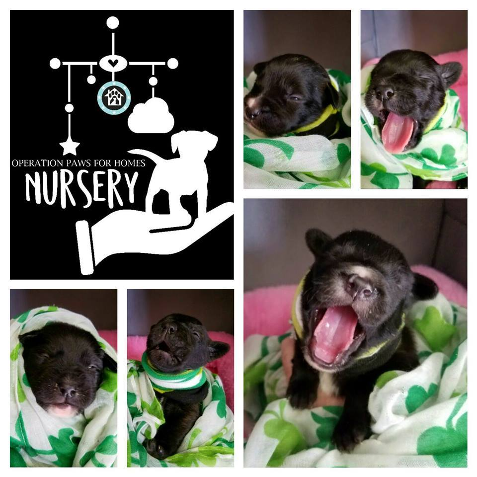 Nursey