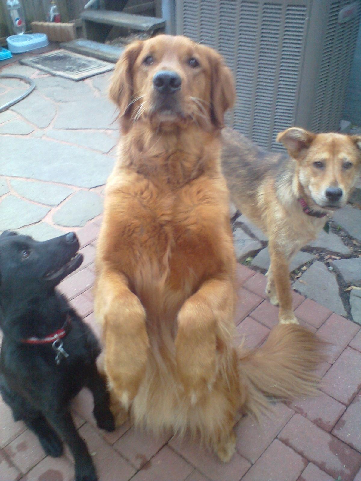 All dogs deserve wonderful homes!