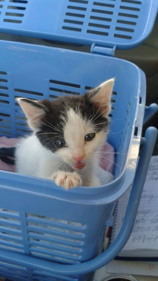 Another Chance Cat Rescue