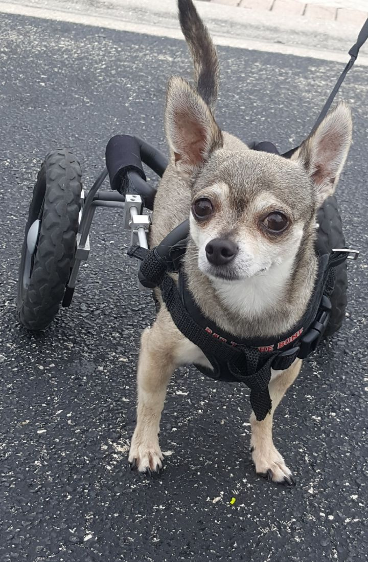 After he lost one leg, Jessy learned to walk again