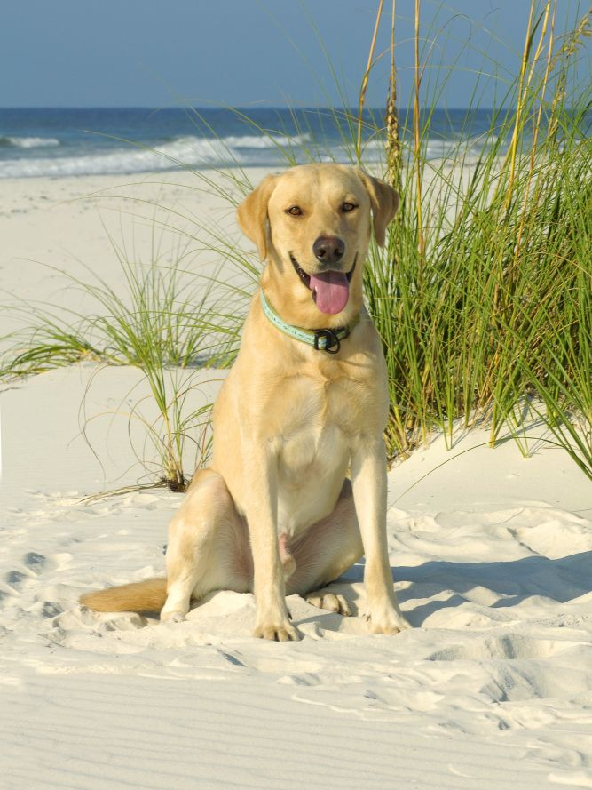 All About Dogs Coastal Rescue