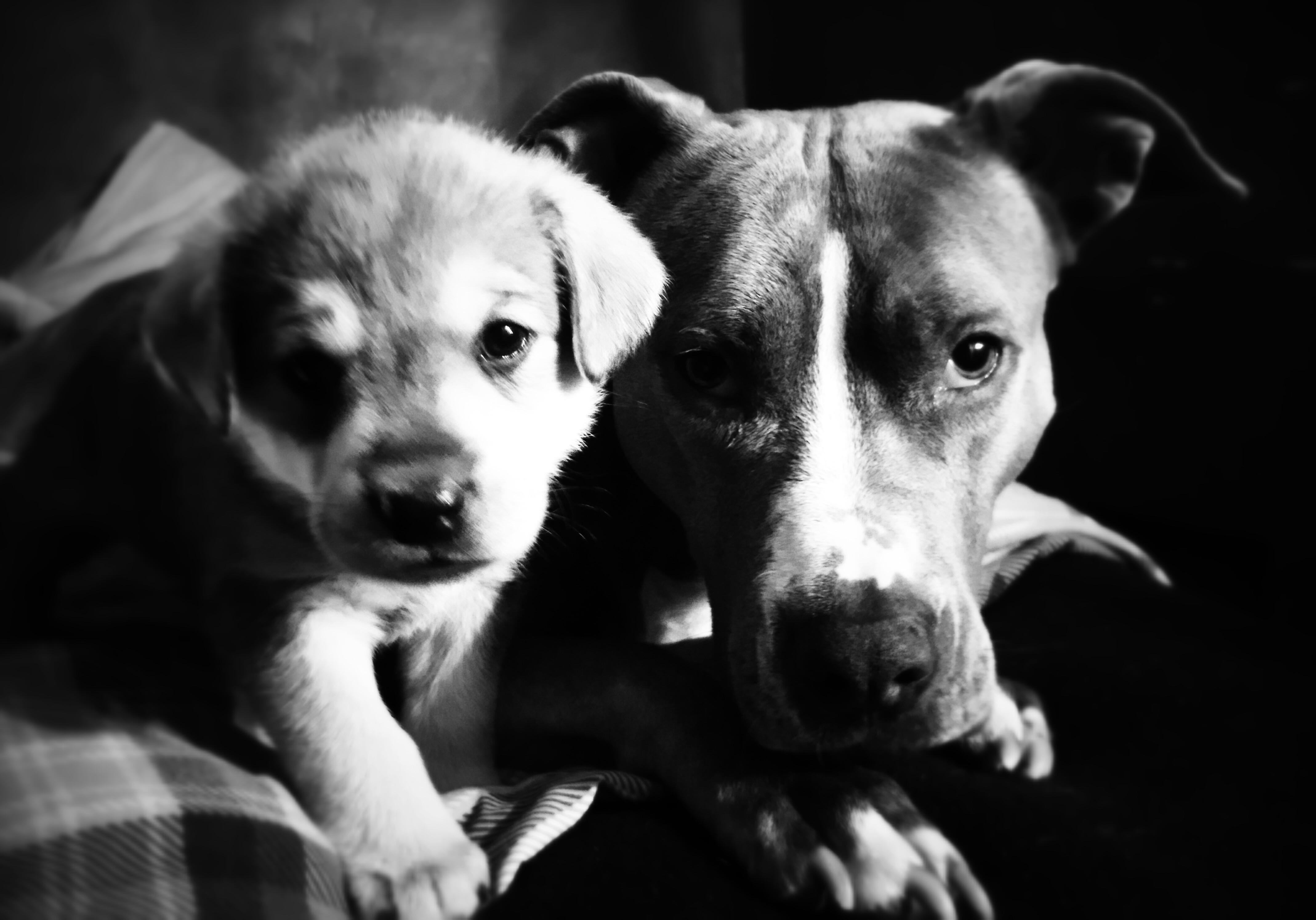 Lita socializing a puppy!