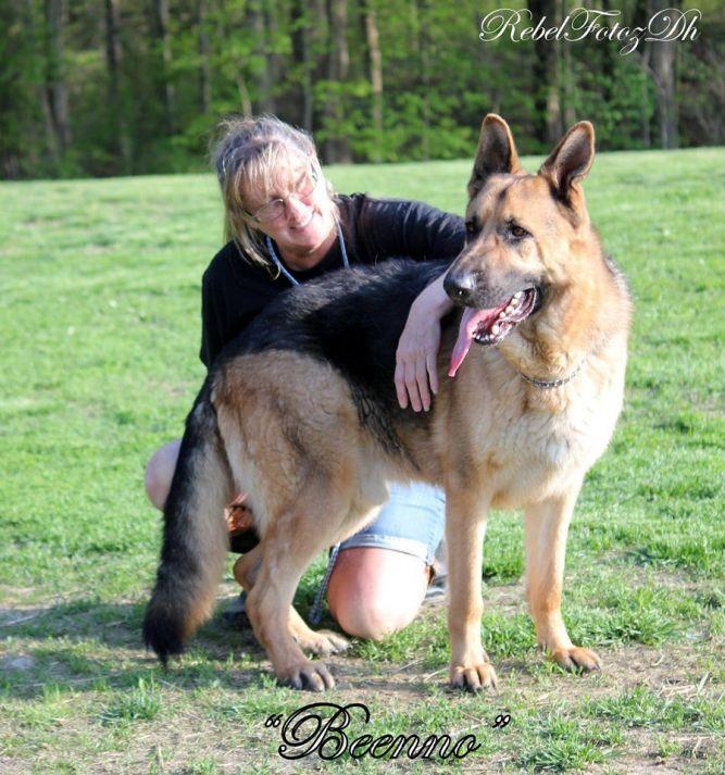 Indiana GSD & Siberian Husky Rescue, Inc