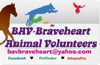 BAV-Braveheart Animal Volunteers