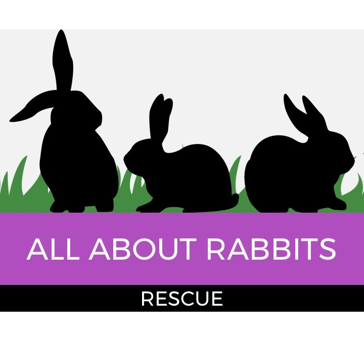 All About Rabbits Rescue, Inc