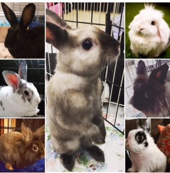 Find your forever bun today.