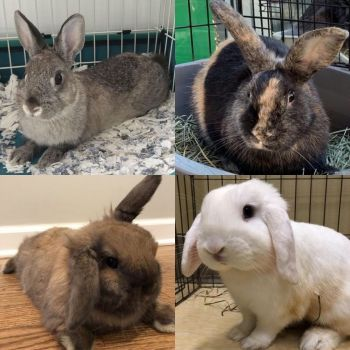 Rabbits waiting for their furever homes