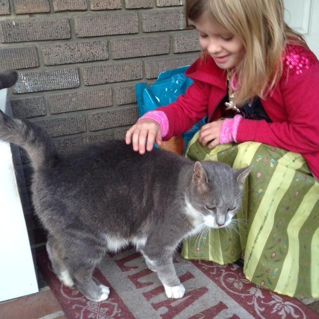 Senior kitty Gandolf enjoying a pet