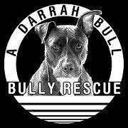 A Darrah Bull Bully Rescue