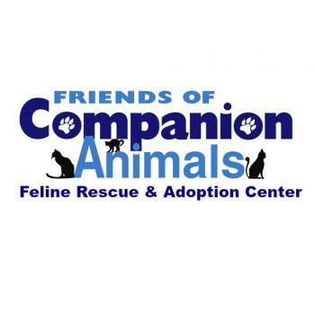 Kitten and Cat Adoption Center in Monroe, MI