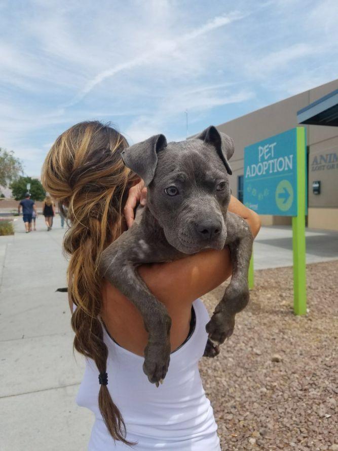 Doggie Rescue LV/Animal Help Alliance