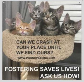 Foster Homes Needed for Cats & Kittens