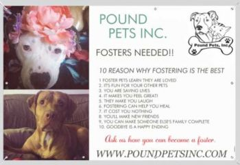 Foster Home Needed for Dogs