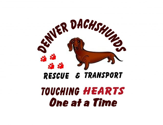 Denver Dachshunds Rescue and Transport