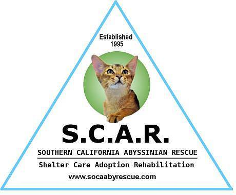 Southern California Abyssinian Rescue (SCAR)