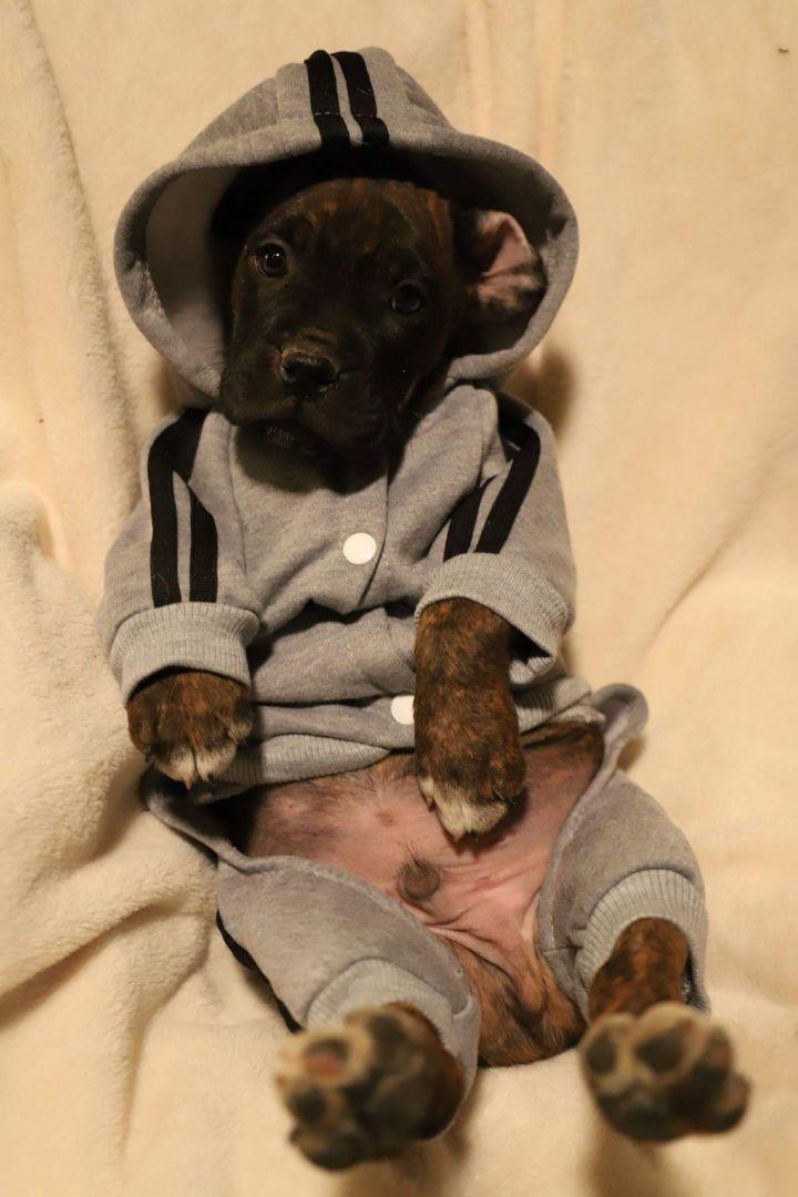 Lazy puppy life
