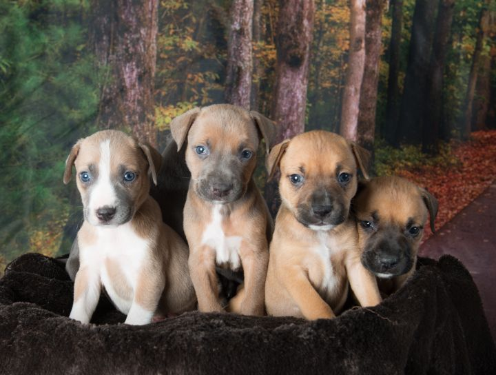 One of our previous litters