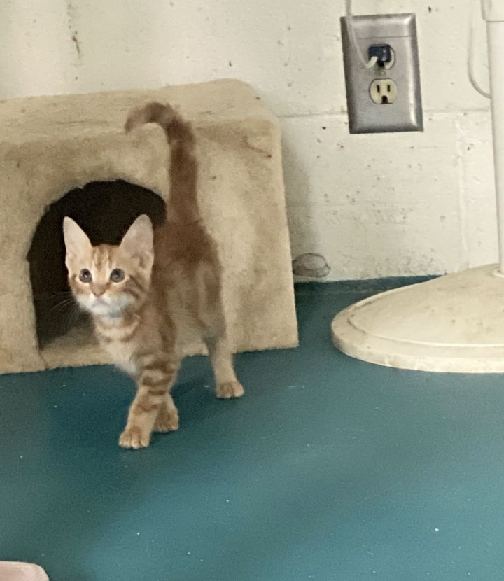 Moe- available for adoption
