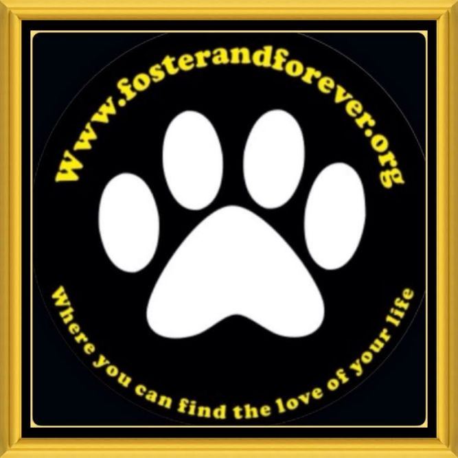 Foster and Forever Pet Rescue