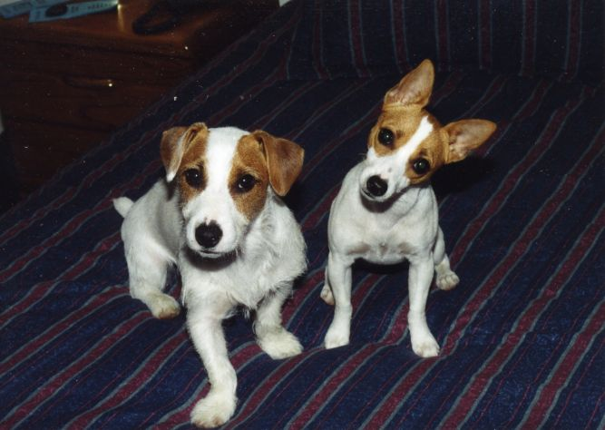 Taz & Penny's Happy Tails Rescue