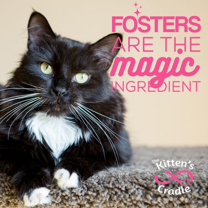 Our fosters are the magic ingredient!