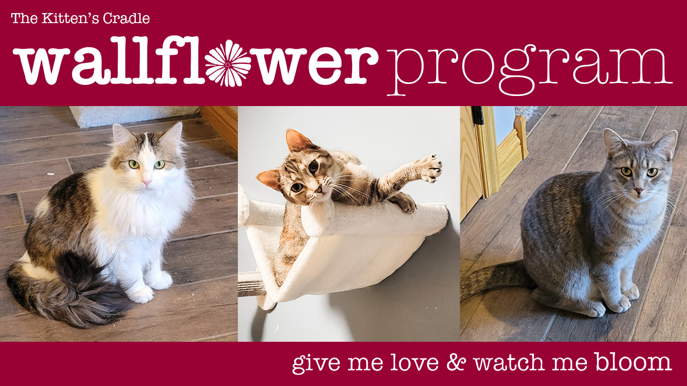 Ask about our shy cat Wallflower Program