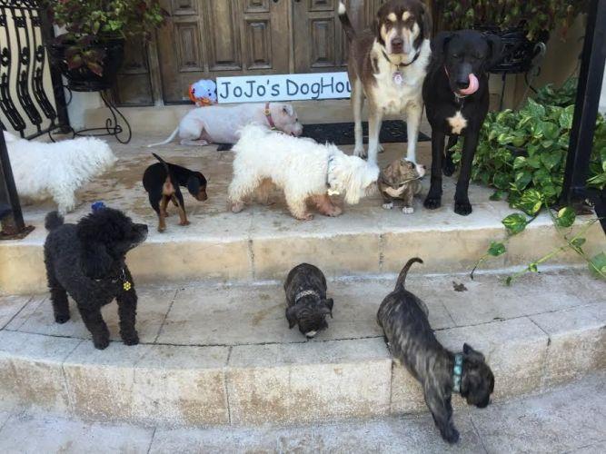 JoJo's DogHouse