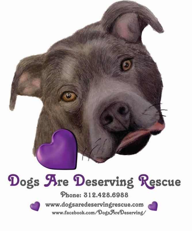 Dogs Are Deserving