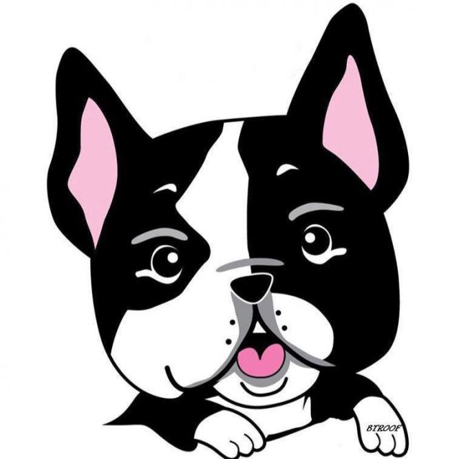 Boston Terrier and Short Nose Rescue of Oklahoma